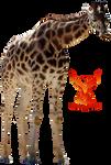 Giraffe 2 by PhoenixRisingStock