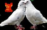 Doves In Love by PhoenixRisingStock