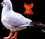 Seagull 5 by PhoenixRisingStock