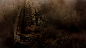 Evil In The Forest - Stock Background