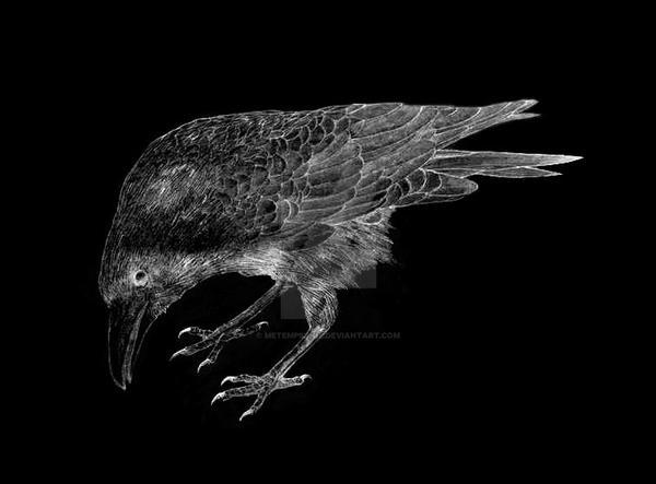 raven by Metempsihoz
