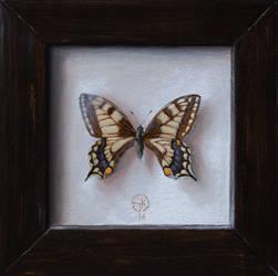 Swallowtail by sampoka