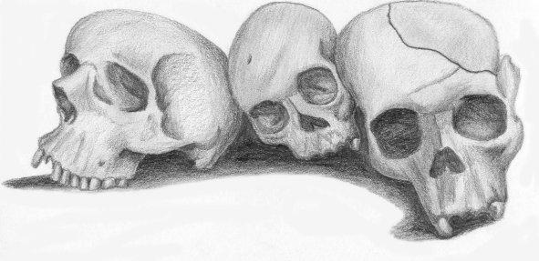 Skulls by n474r