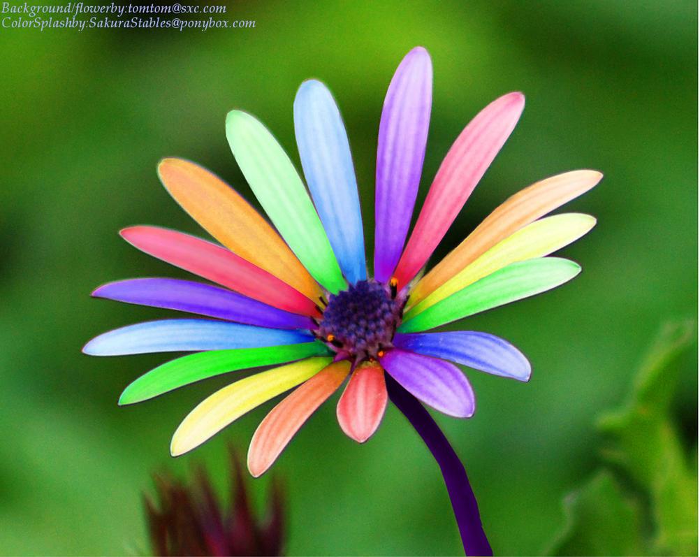 Color splash Flower by Special-KGirl on DeviantArt