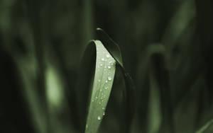 Dark Grass WP by Ythor