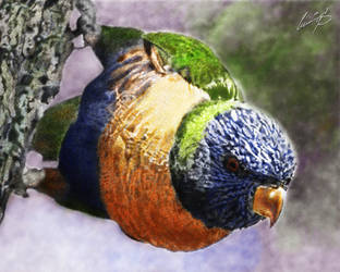 Rainbow Lorikeet by CUMMINGSart