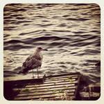 birdy-