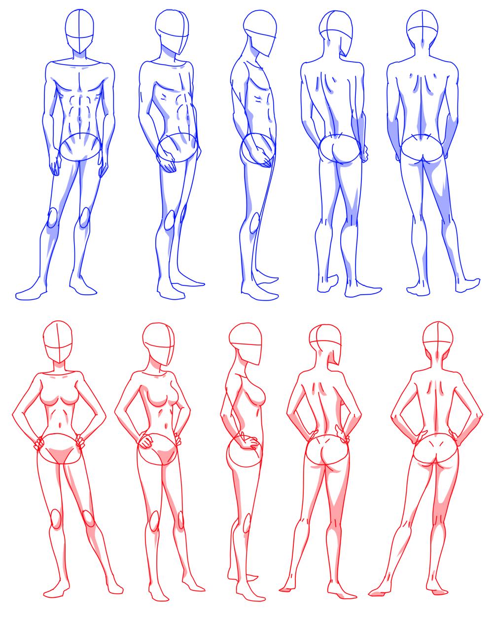 Anime female anatomy