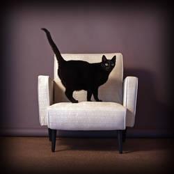 Cat Sitting by zapfino
