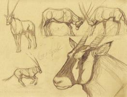 Gemsbok Sketches by akeli