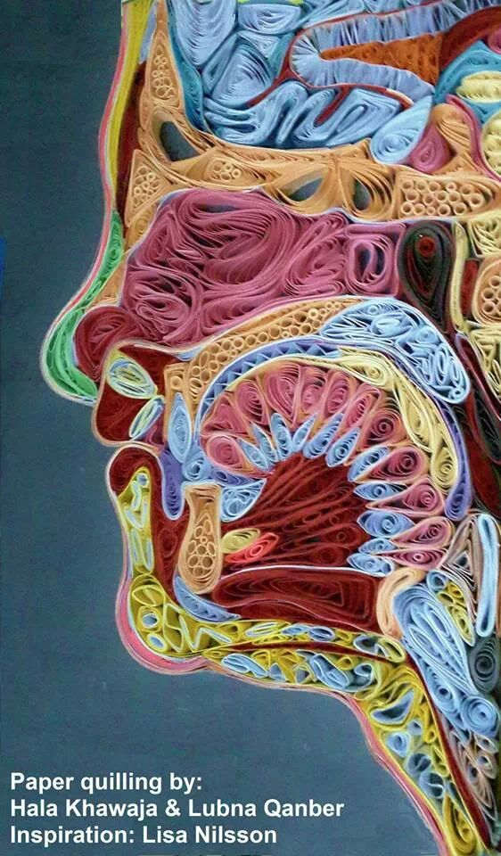 paper quilling: cross section by LubnaQanber