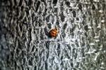 Ladybug on a Tree