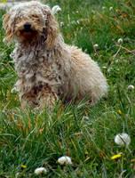 Stray Dog by brindlegreyhound