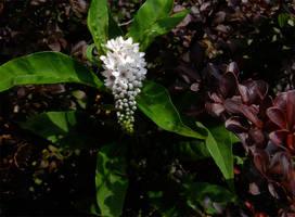 Obligatory Flowers by brindlegreyhound
