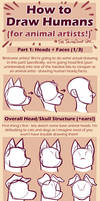 HOW TO DRAW HUMANS (for animal artists) Heads 1/3