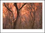 Dancing Trees by GuyTal