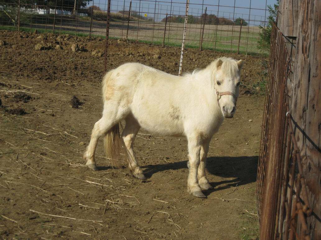mlp real life pony by metroxlr on deviantart