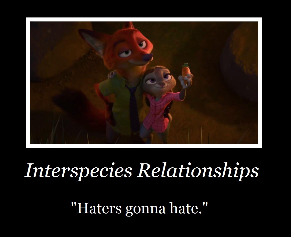 Funny Zootopia Memes : Zootopia rabbit memes related keywords