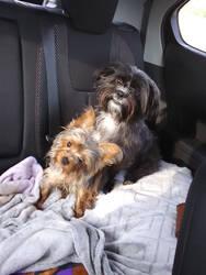Max and Babydoll