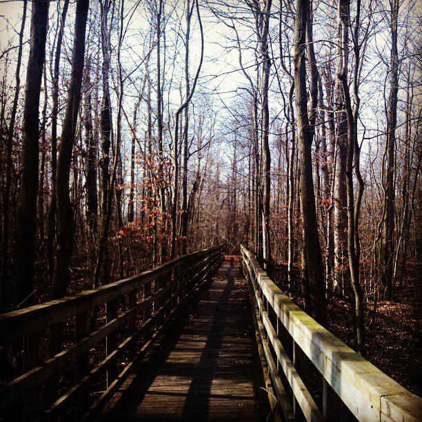 wonder in the woods by SumFaKingGuy