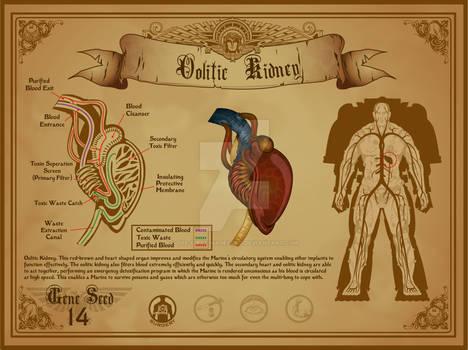 Space Marine Oolitic Kidney