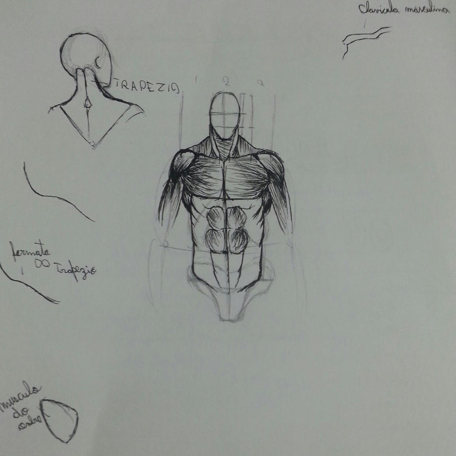 Practicing anatomy. by LeoSandrini