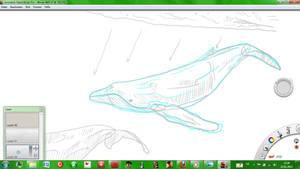 Whale WIP