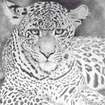 Hyper Realistic Sri Lankan leopard