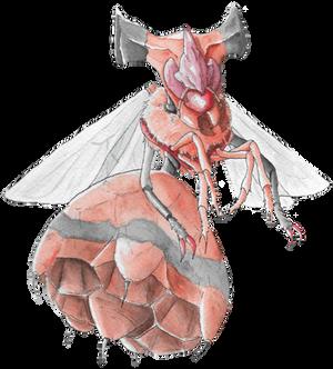 Pokemon Community Collab - Vespiquen (Shiny)
