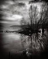 Wings by kpavlis
