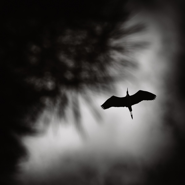 The flight by kpavlis