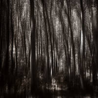 Into the woods II by kpavlis