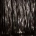 Into the woods II