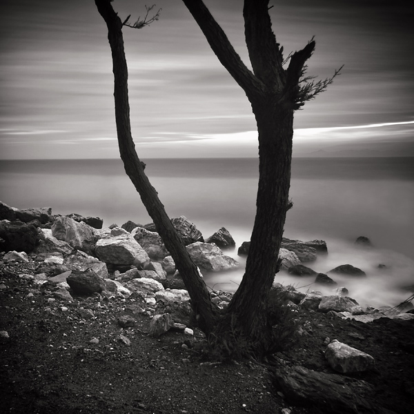 Tree and the sea by kpavlis