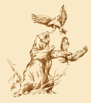BEAR AND EAGLES