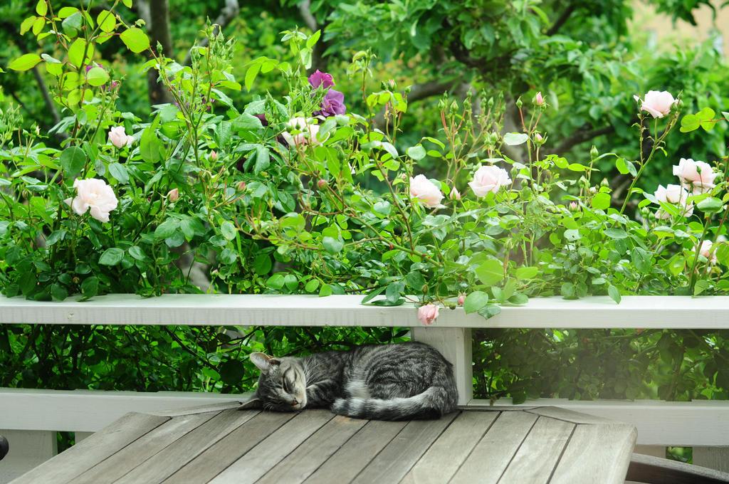 Sleeping in Green by Maozi