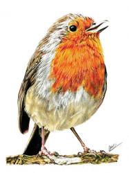 Robin by nightfuryscars