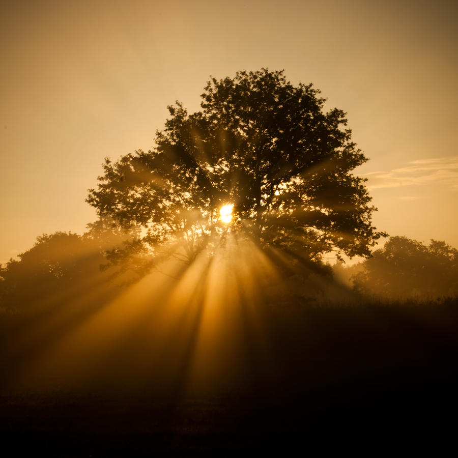 Sun Beams by NicoFroehberg
