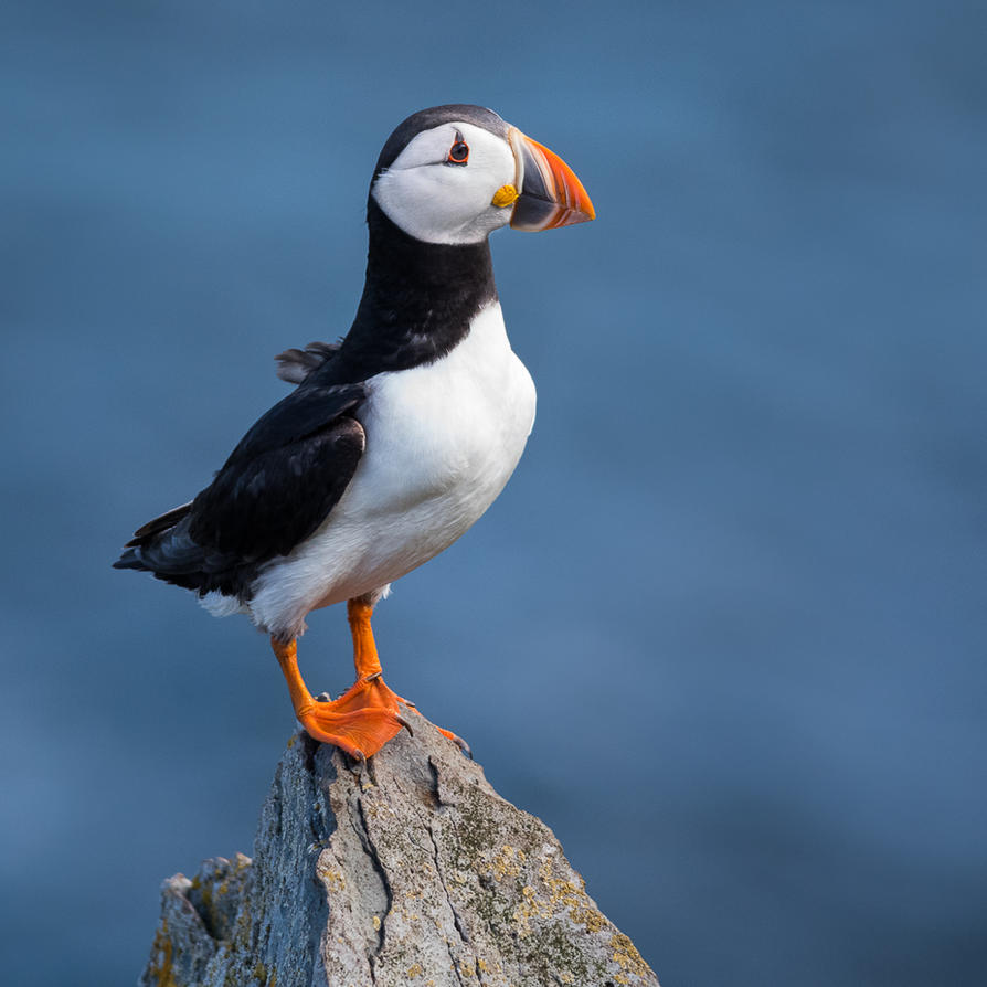 King of the Hill by NicoFroehberg