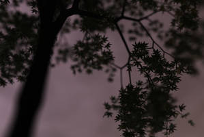 Japanese Maple by P1x3ltr4sh