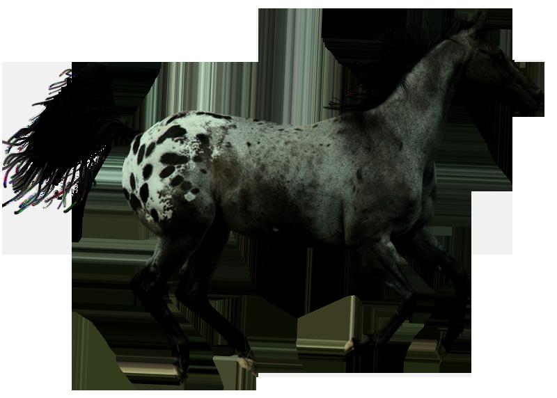 صور احصنه بدون خلفيه png سكرابز حصان png صور احصنه precut_appaloosa_by_rigaboo-d6bd0a0.png