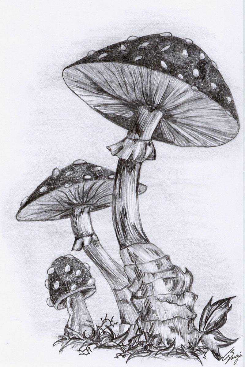 mushrooms by nerissa the vampire on deviantart