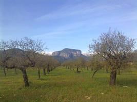 Mallorca rural by heegen