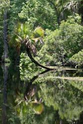 The Tarzan Tree