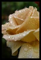 Golden Droplet by KingsRansom