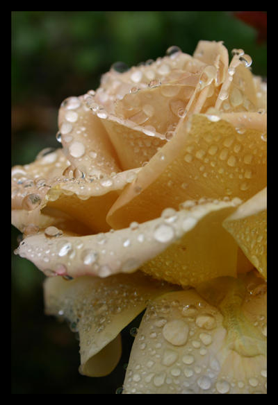 Golden Droplet