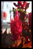 Fire Flower by KingsRansom
