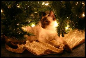 Christmas 2005 - 1 by KingsRansom