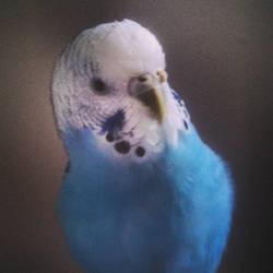 Bright blue baby by WarriorCheetah