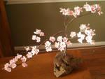 Sugar Cherry Blossom Bonzai by kgc-inusan